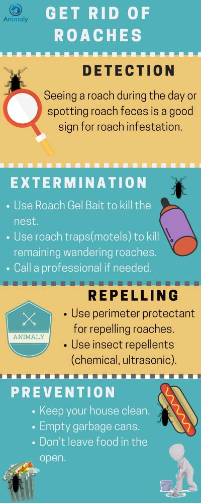 Best Roach Killer – Get Rid of Roaches Without an Exterminator ...